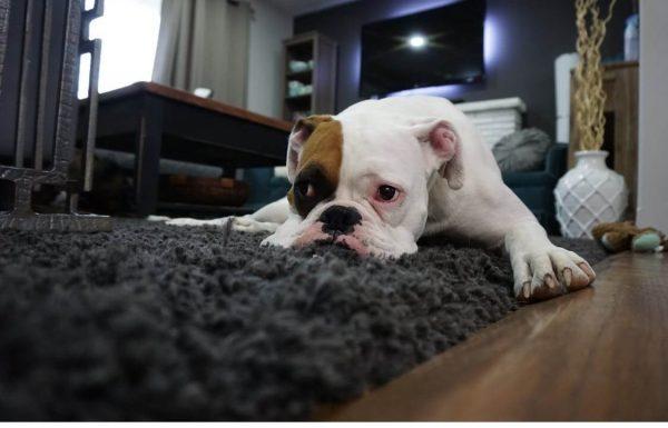רכשתם שטיחים לבית, מיקמתם אותם ושדרגתם את העיצוב? קבלו את המדריך לניקוי שטיחים