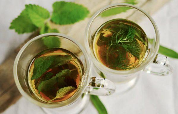 חורף בריא: צמחי המרפא שיעזרו לכם לעבור את החורף בשלום